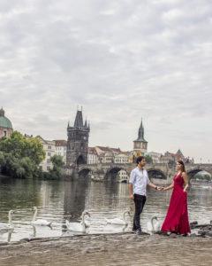 Prague vltava swans spot
