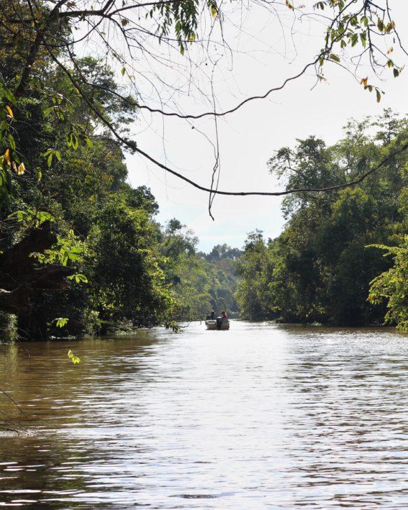 Kinabatangan River tour