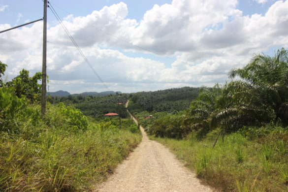 palm oil borneo sukau