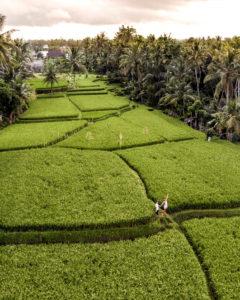 sari organic walk ubud